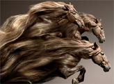Horse Hair Style
