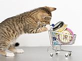 Kitty Mart