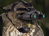 Night vision of the owl