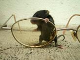 Mice Stock