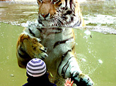 In Zoo