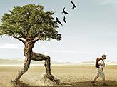 Trees Walker