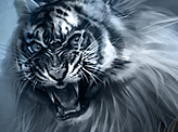 The Year of Tiger
