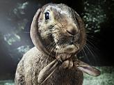 Annoyed forester Rabbit