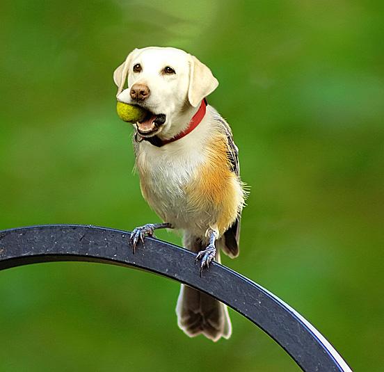 Birdog