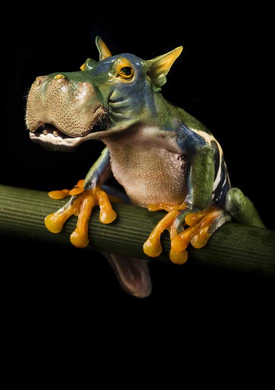 Hippofrog