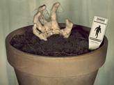 Zombie Plant