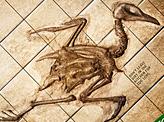 Chicken Fossil
