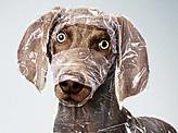 Wrapped Dog