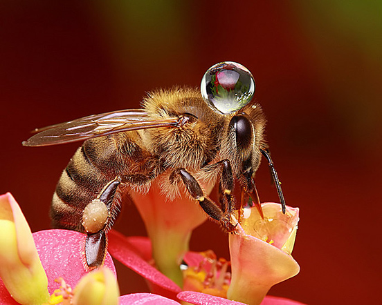 Drop on Bee
