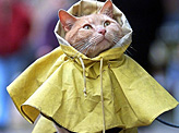 Kitty Coat