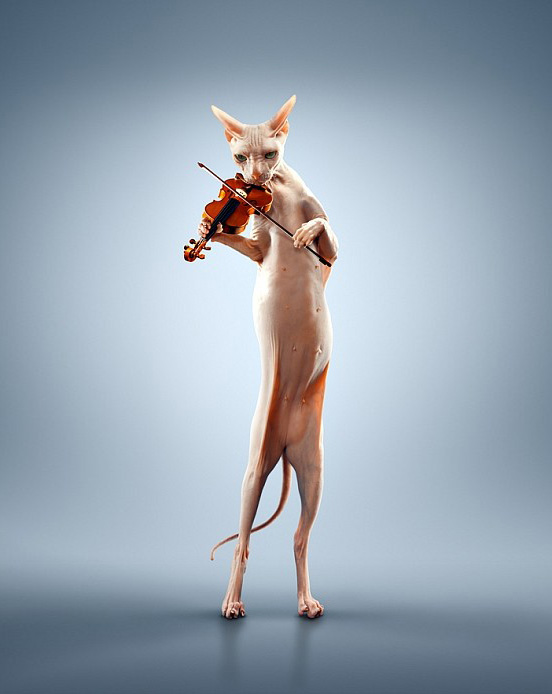 Just A Cat Playing The Violin