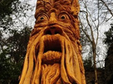 Mysterious Tree Carvings