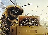 Farbraum Beekeeper