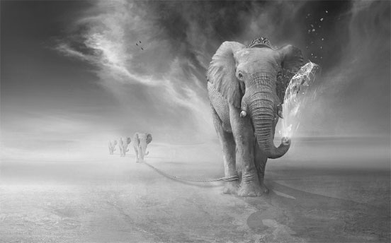 Elephants Trip