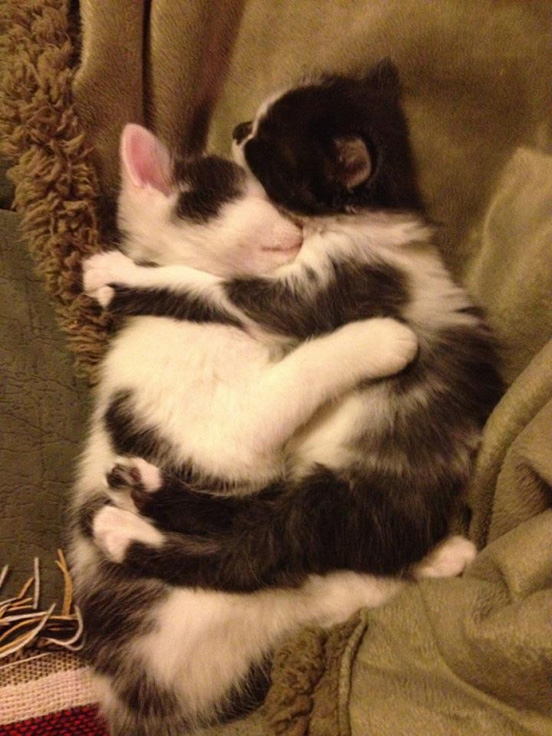 40 Really Cute Cuddling Kittens In The World The Design Inspiration