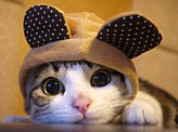 Cutest Cat In The World