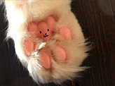Bear On A Kitty Paw