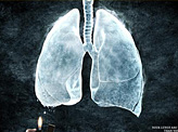 Your Lungs are More Sensitive Than You Think