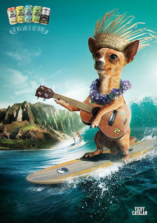 Surfer Chihuahua