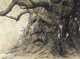 Oak Shee