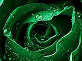 Happy 81 Saudi National Day
