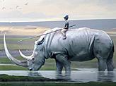 Tame Rhino