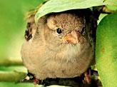 Bird's Umbrella