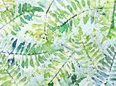 Ferns Pattern