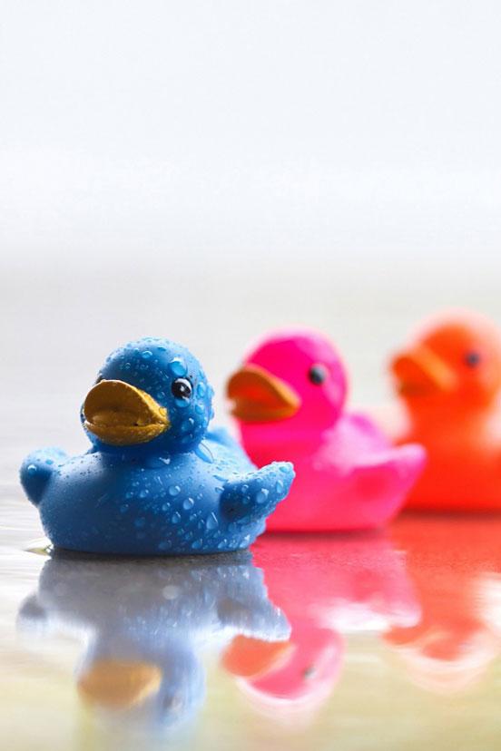 Multicolor Ducks