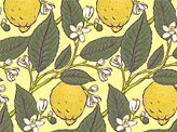 Citron Pattern