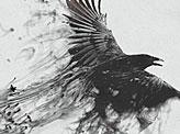 Birds Black and White Dark