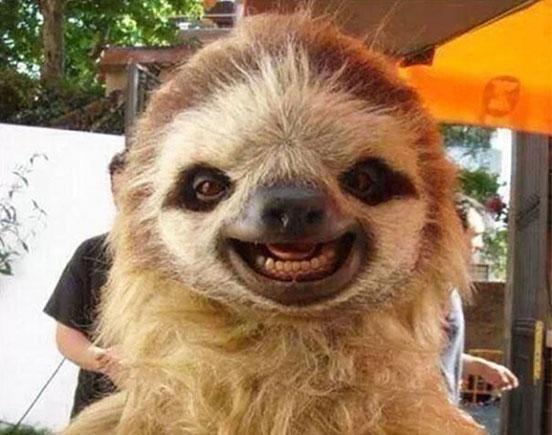 Laughing Sloth