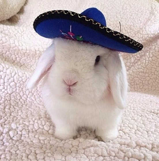 Petit lapin avec un sombrero