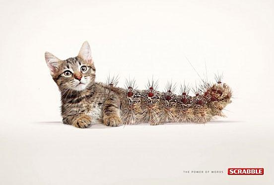 Cat Erpillar