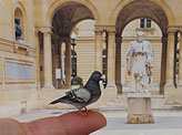 Miniature Pigeon sculptures