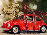 Little Red Riding Beetle
