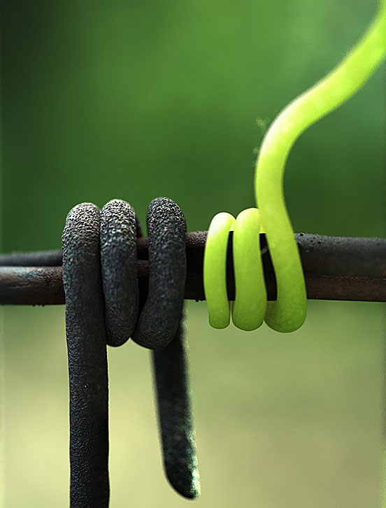 Wire And Vines