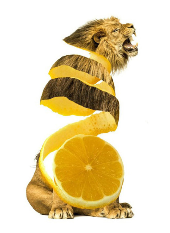 06-limon3