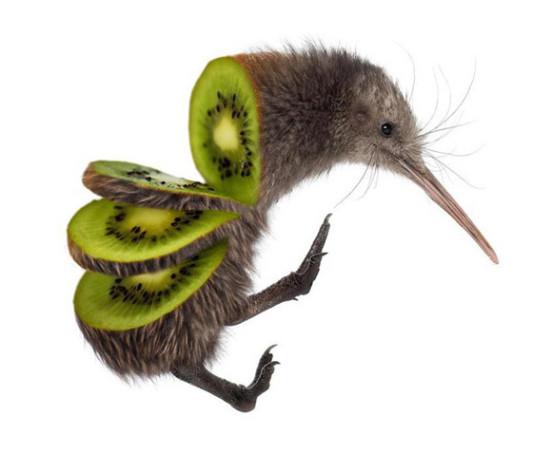 11-kiwi3