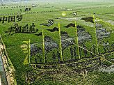 Chinese Farmers Turn Rice Paddies