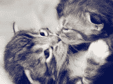 Kitty kisses