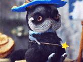 wizard cat