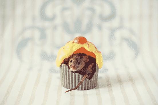 Frog in Cupcake
