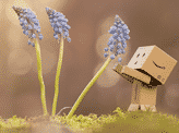 Danbo & Three Winter Flowers