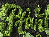 Planting Kindness