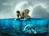 The Lost Aquarium