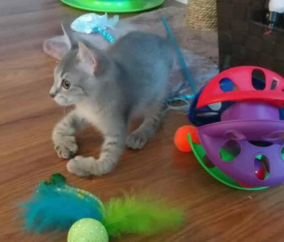 Scooter The Kitten