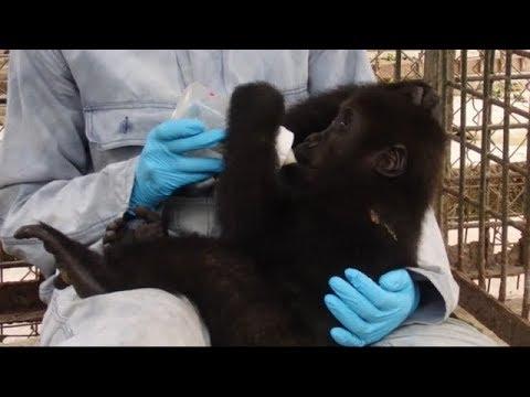 Gorilla Bottle