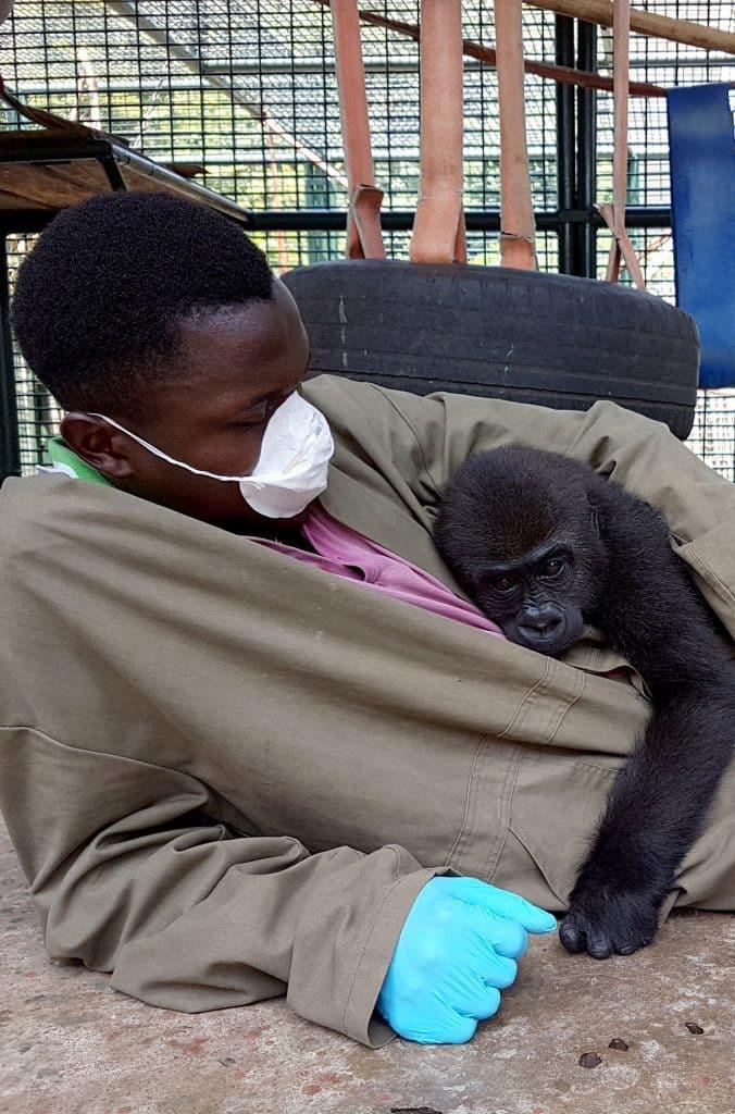 Gorilla Snuggle